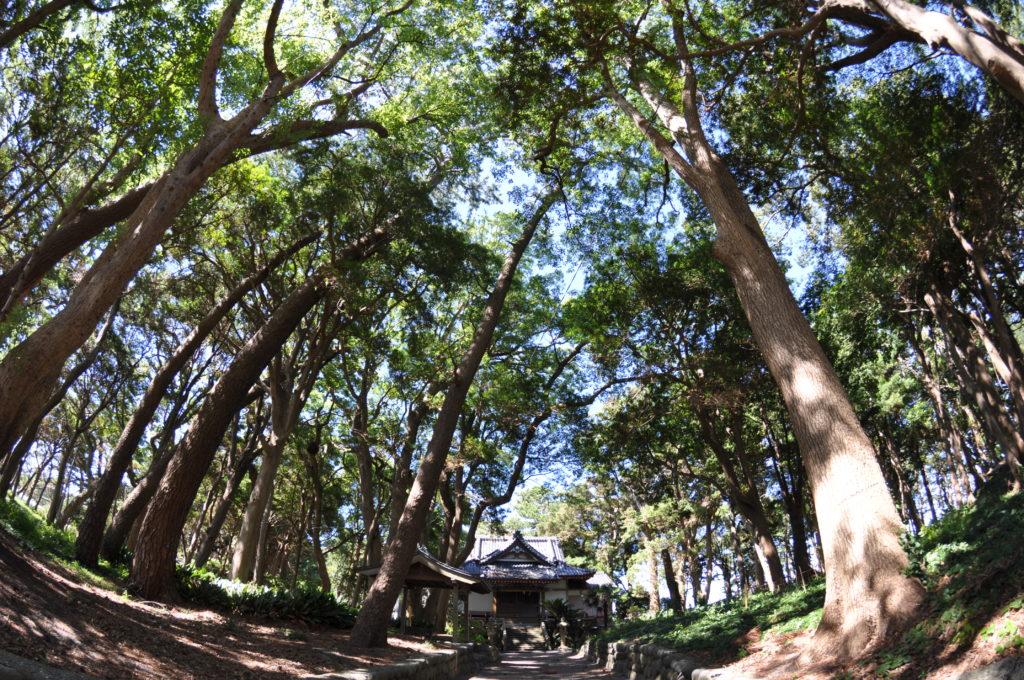 諸口神社とイヌマキの森  CC BY