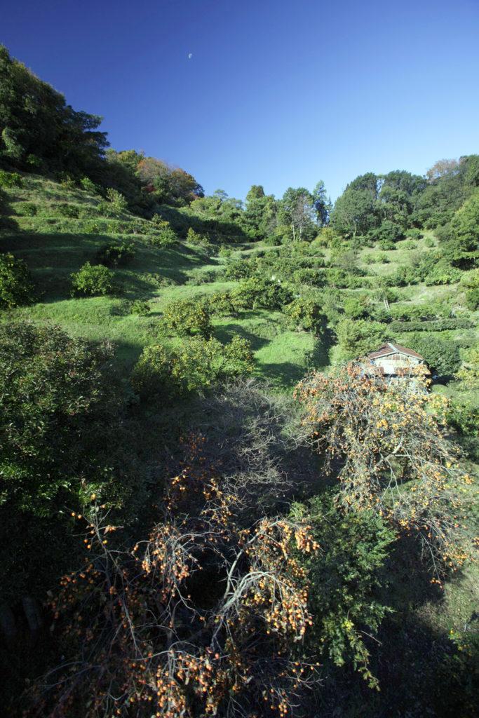 日当たりの良い斜面を利用したみかん畑 CC BY