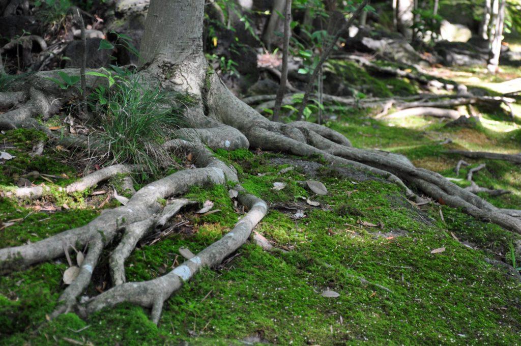 溶岩の上の木々 CC BY