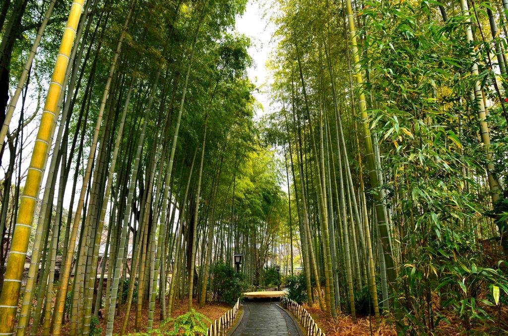 竹林の小径 CC BY