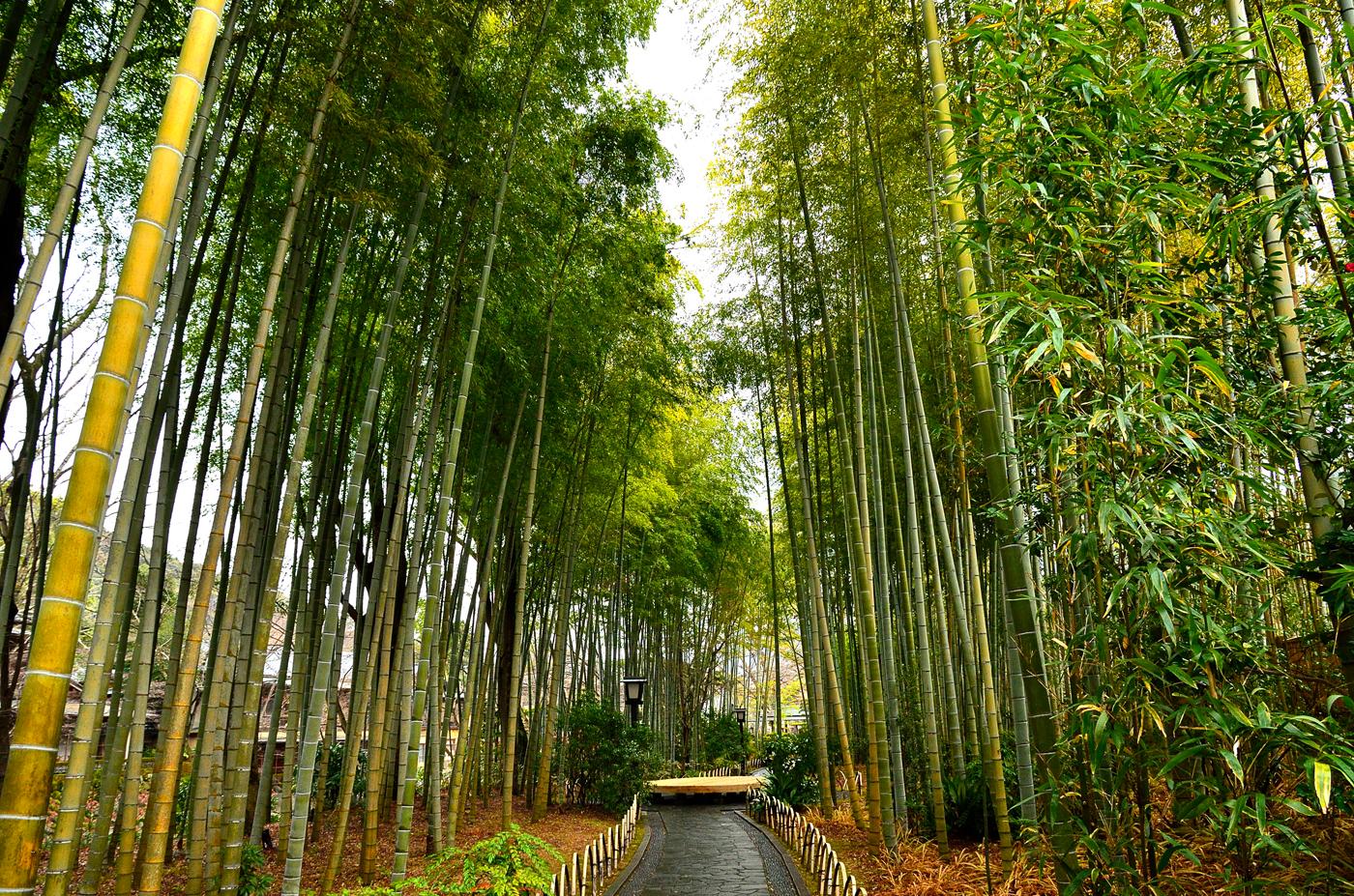 竹林の小径 CC BY-SA